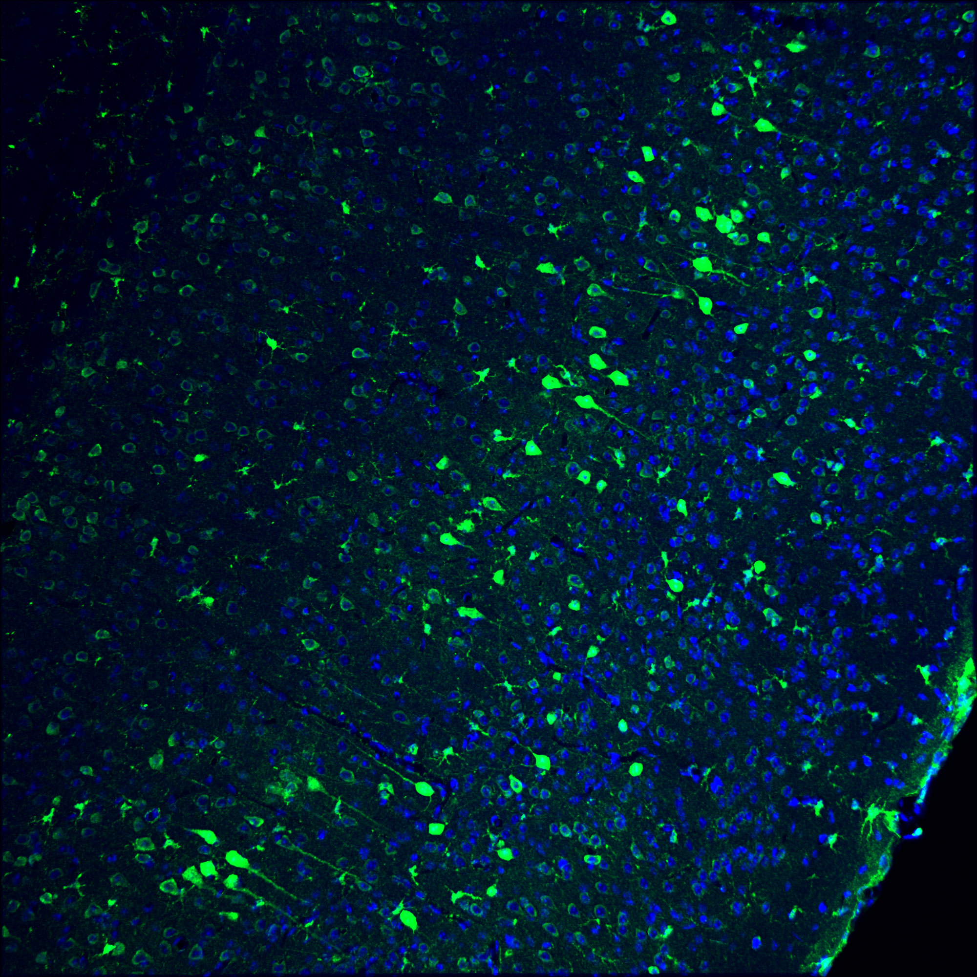 Gene-editing technology partially restores vision in blind animals