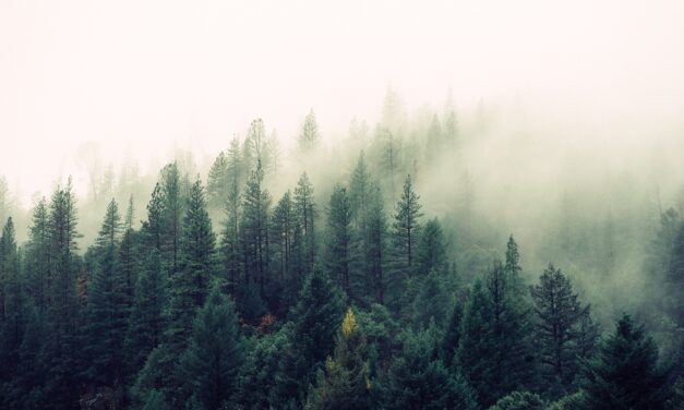 Kenmark Eyewear partners with the National Forest Foundation for second year